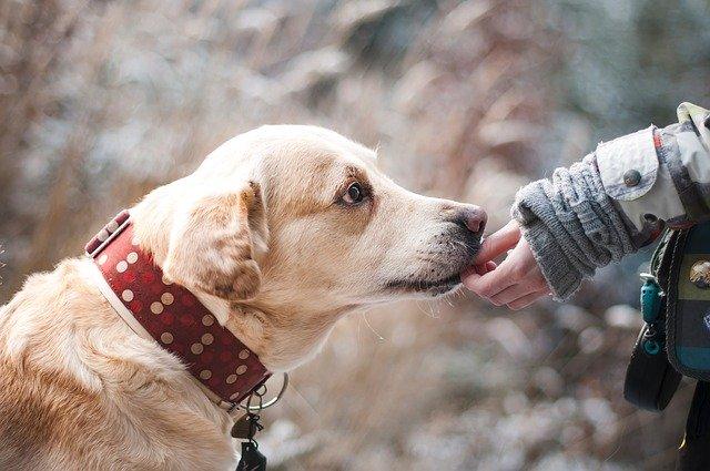 Herencias a Salvo. Asegurar el cuidado de los animales de compañía de por vida